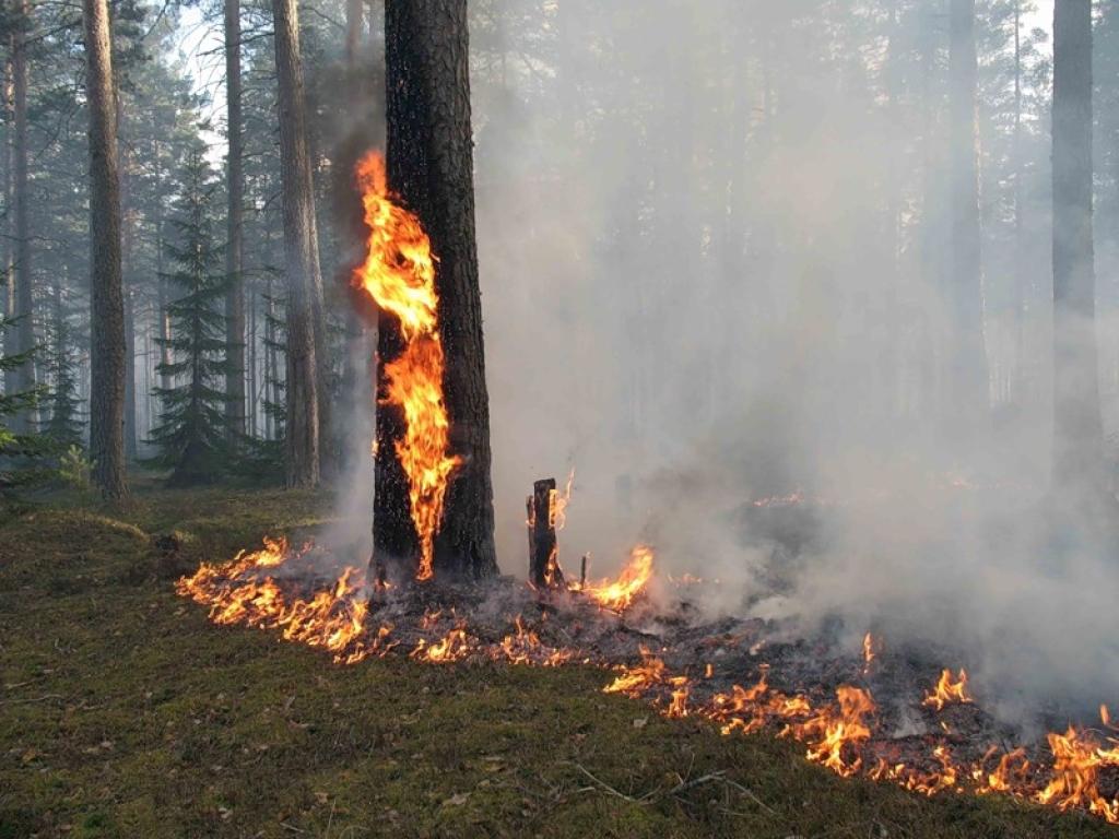 горит дерево.какой это класс пожара