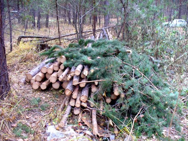 Прокуратура пресекла вырубку деревьев в Уфе, возбуждено дело