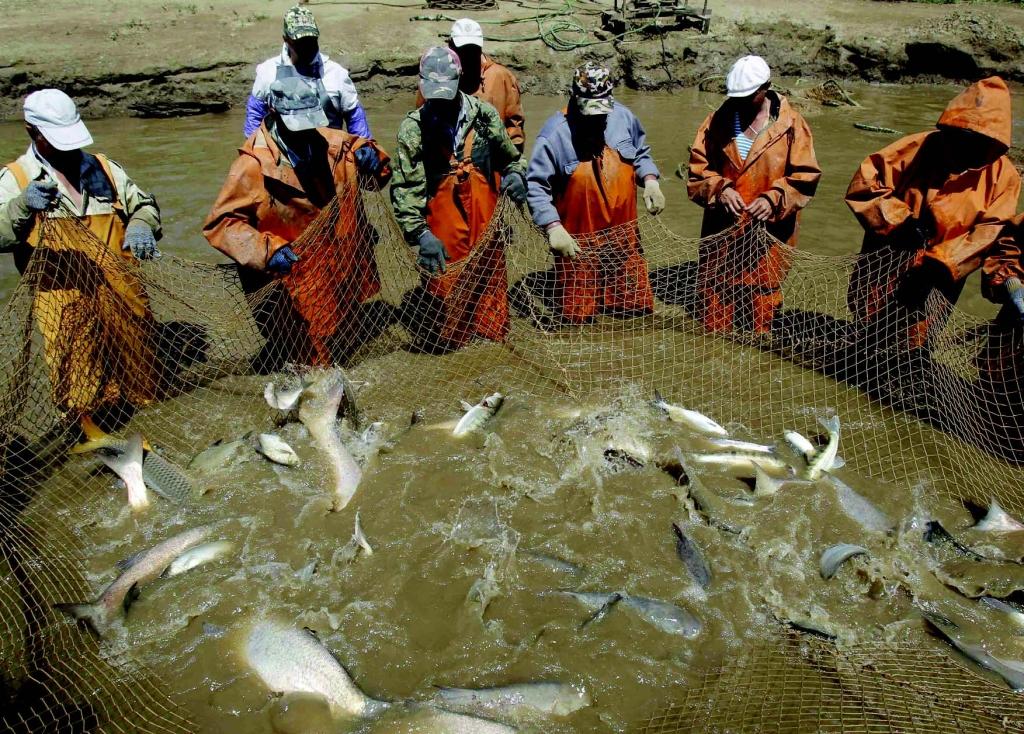 рыболовный промысел в россии