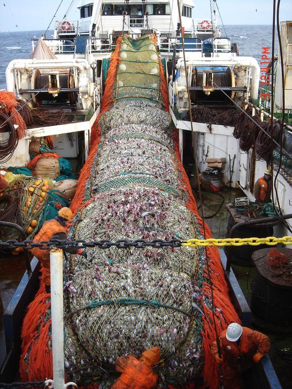крупные рыбопромысловые компании владивостока