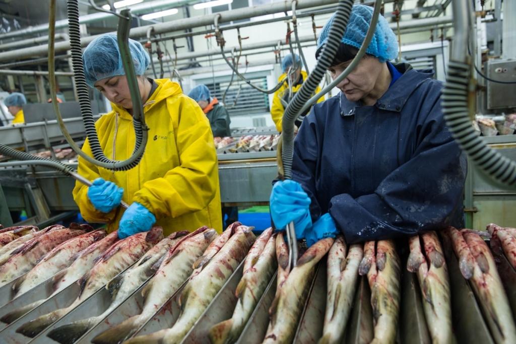 Отзывы о работе в рыбном дне