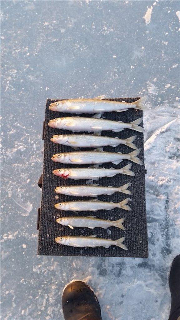 какая рыба клюет на червя