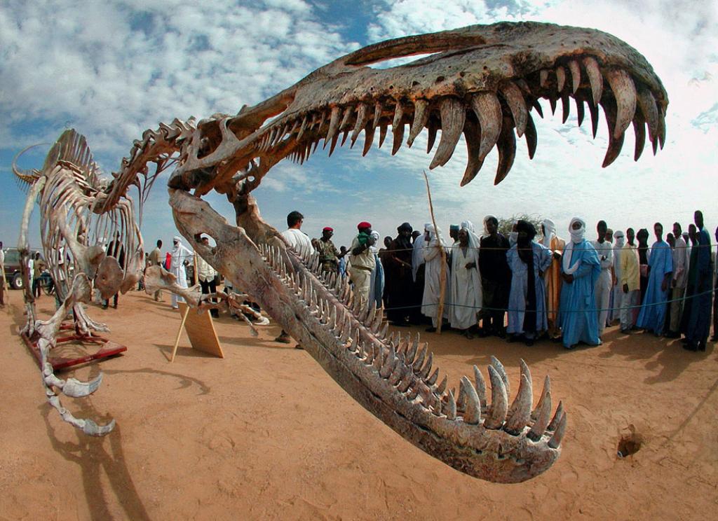 Динозавры, динозавр, скачать обои и фото