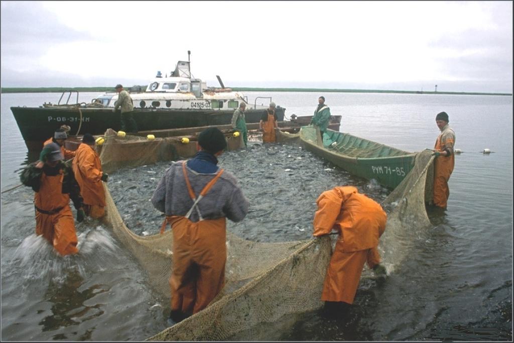 требуются матросы на рыбаки