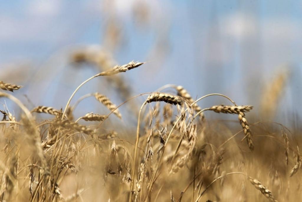 РФ и КНР создадут вСибири крупный зерновой терминал
