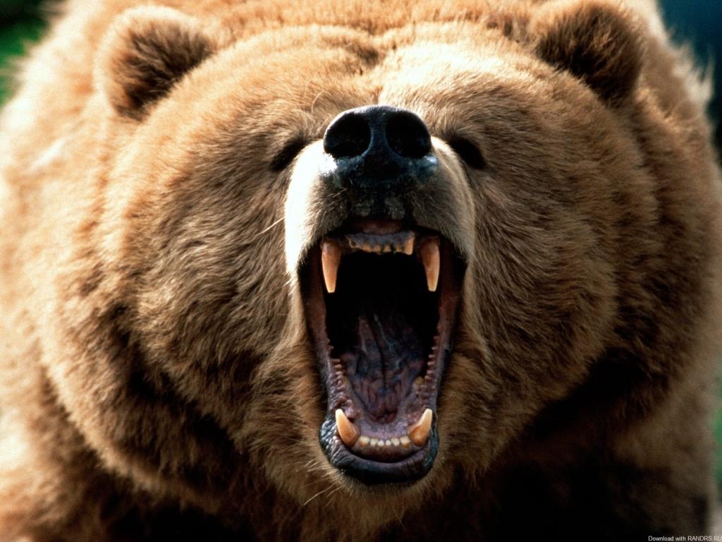 НаКурилах вцентре села полицейские убили разъяренного медведя