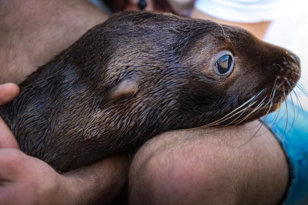 ВПриморском океанариуме появился новый постоялец