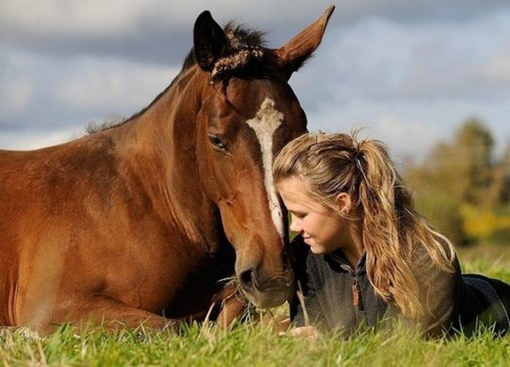 Ученые изНорвегии обучили лошадей «общаться» слюдьми
