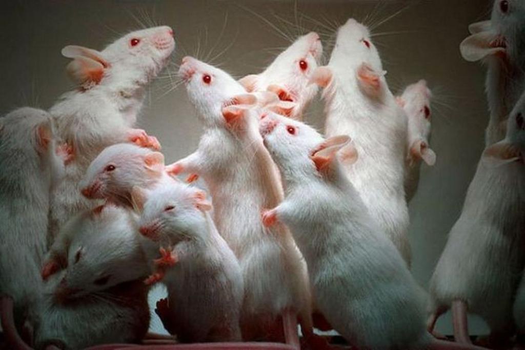 Живых мышей получили избесформенной клеточной массы