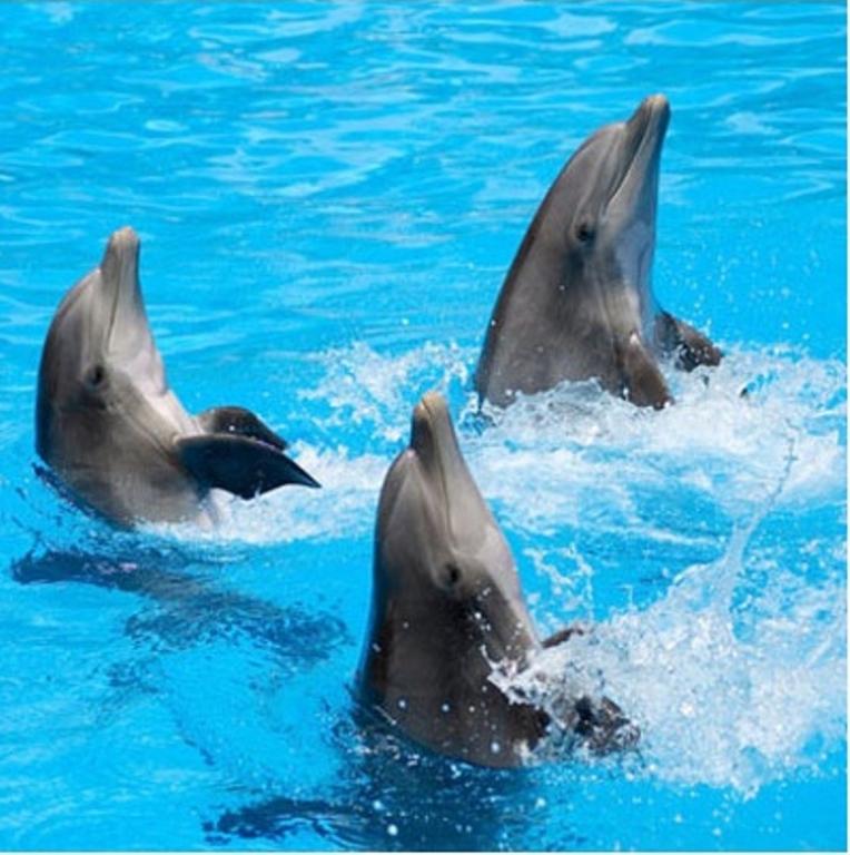 Дельфинов вПриморском океанариуме могли отравить