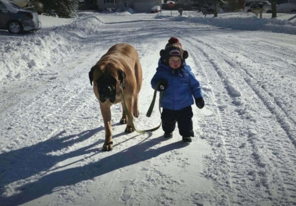 ВЮжно-Сахалинске собачка протащила ребёнка наповодке пооживлённой дороге