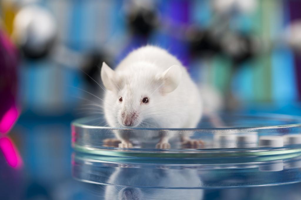 Стволовые клетки помогут влечении костных заболеваний