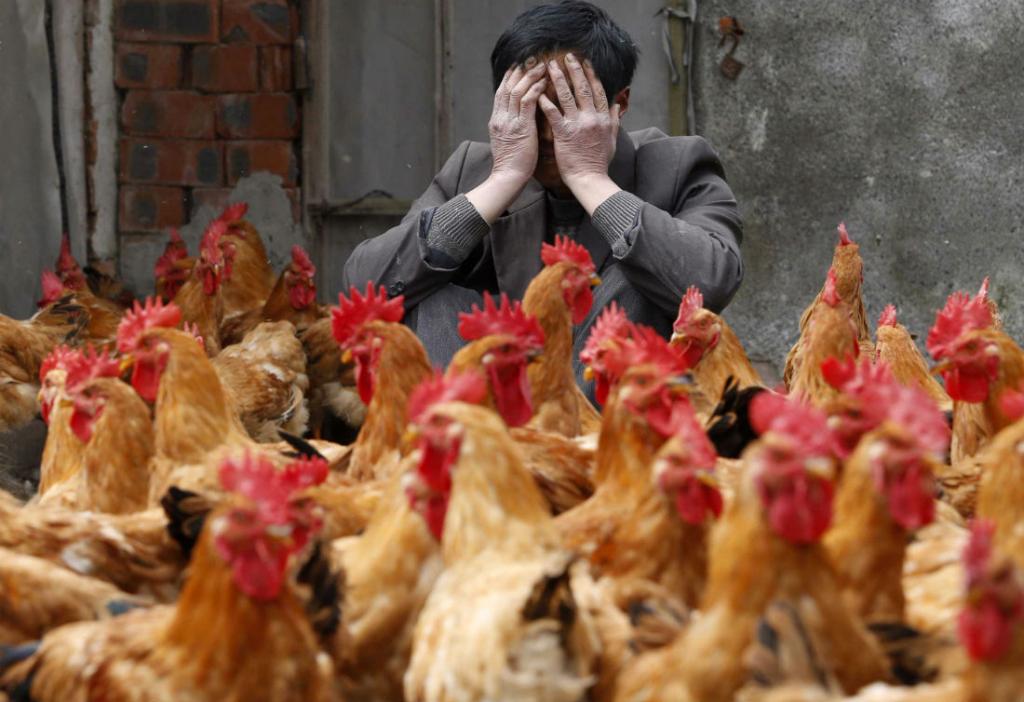 Россельхознадзор боится  распространения птичьего гриппа вКрыму