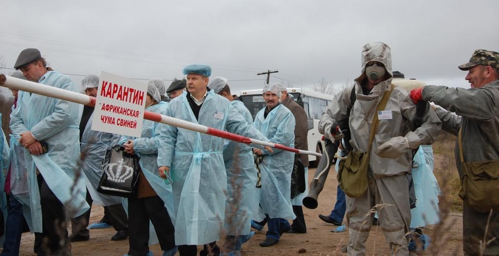 Африканская чума свиней: обстановка вТульской области— неблагоприятная