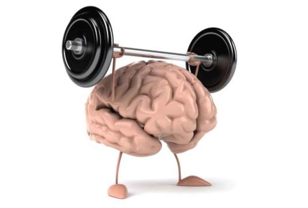 Большой мозг неявляется признаком высочайшего интеллекта— Ученые