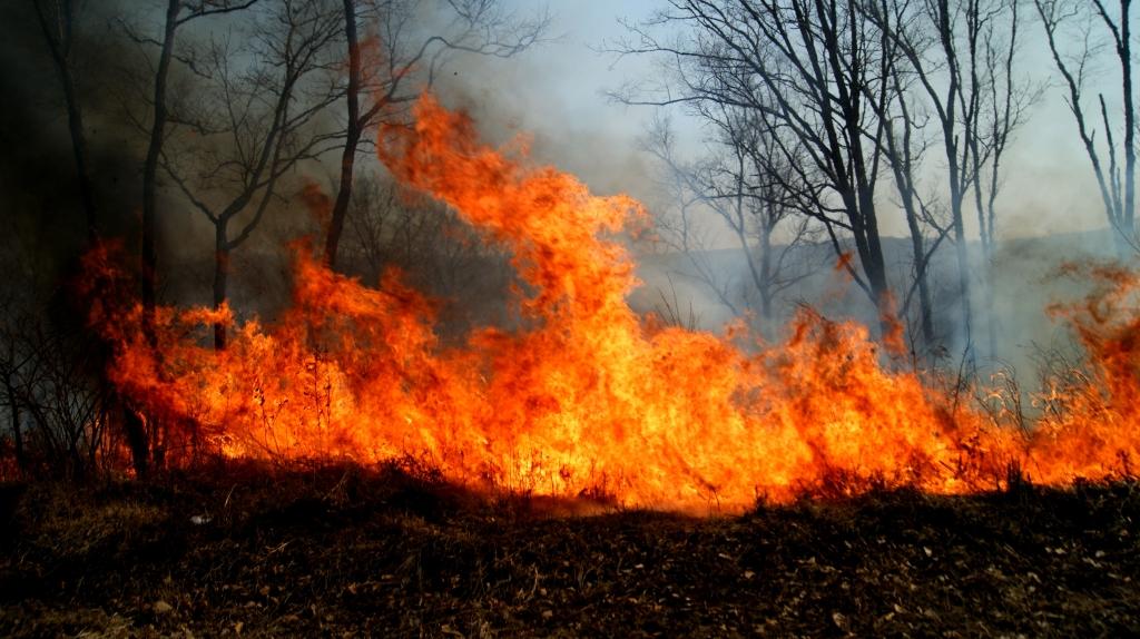 13 лесных пожаров потушили вПриморье засутки