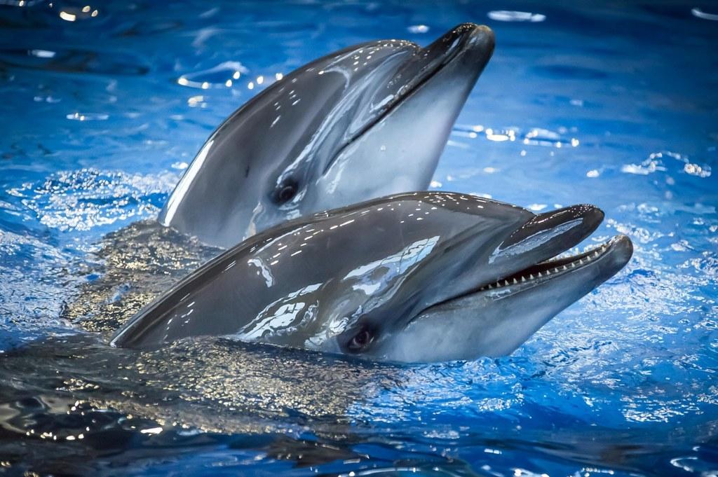 Дельфины Приморского океанариума научились рисовать