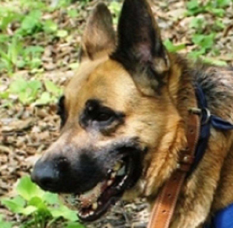 СКР возбудил дело пофакту смерти ребенка отукусов собаки вПриморье