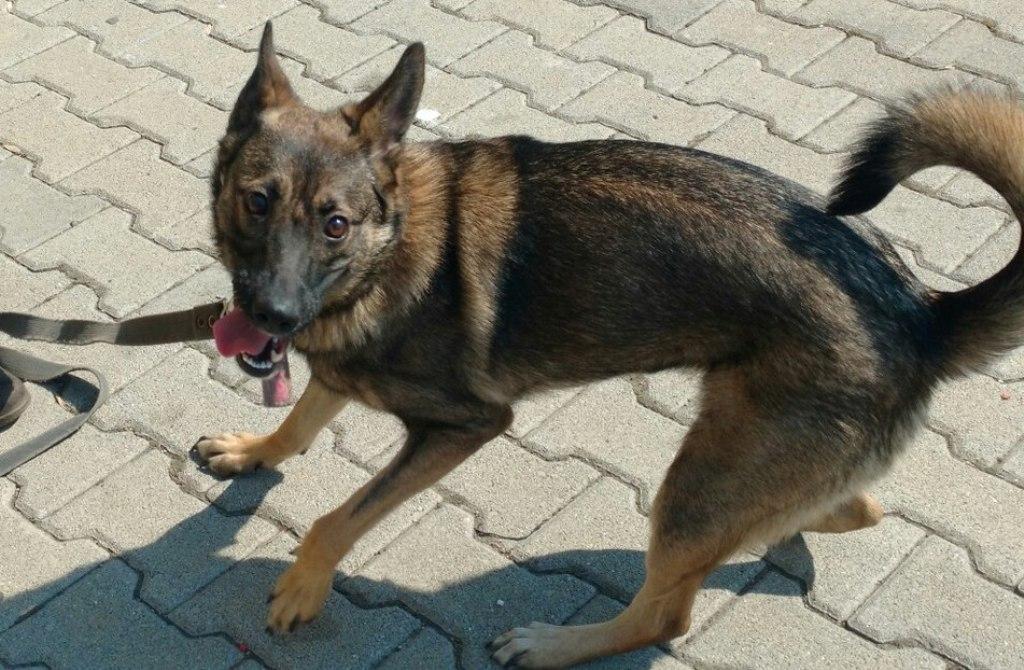 ВКитайской республике создали первую вмире генномодифицированную клонированную собаку
