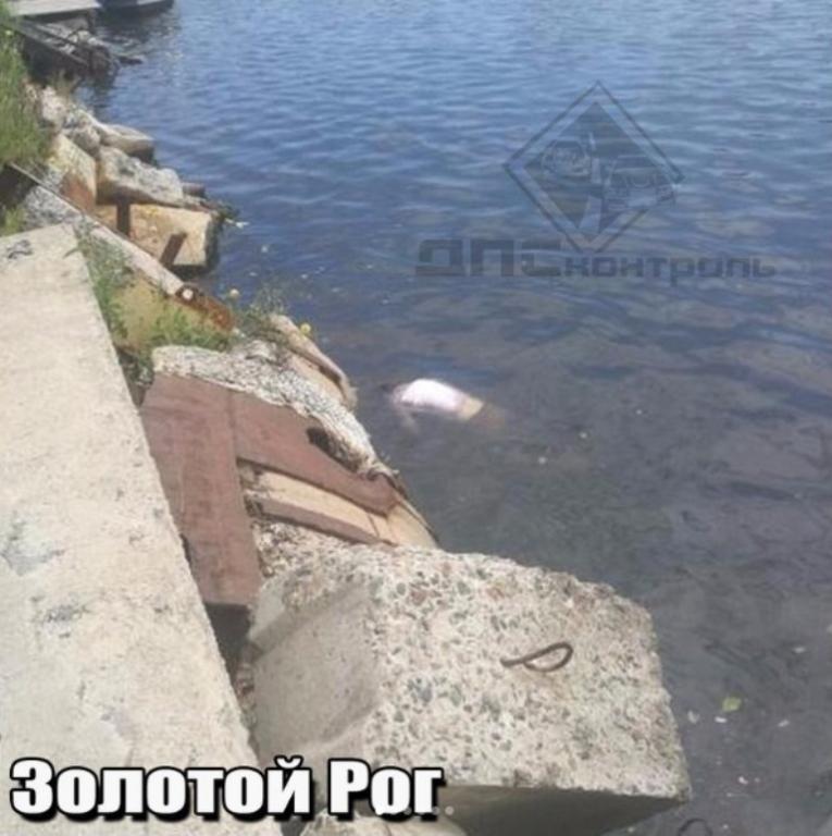 Во Владивостоке в бухте Золотой рог обнаружили труп утонувшего мужчины