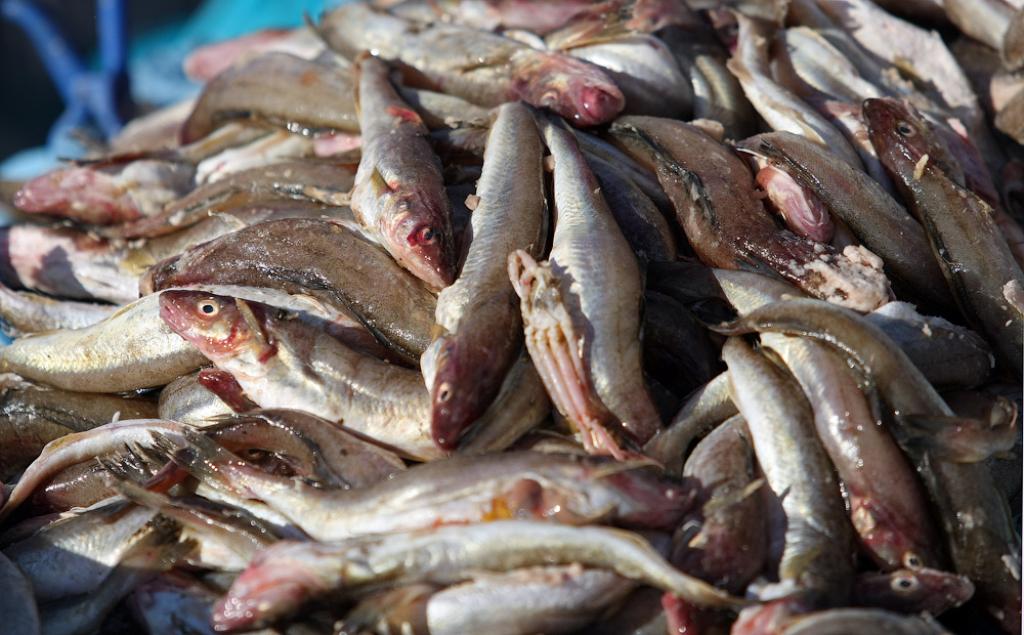 Российская Федерация хочет увеличить вылов рыбы до5 млн тонн