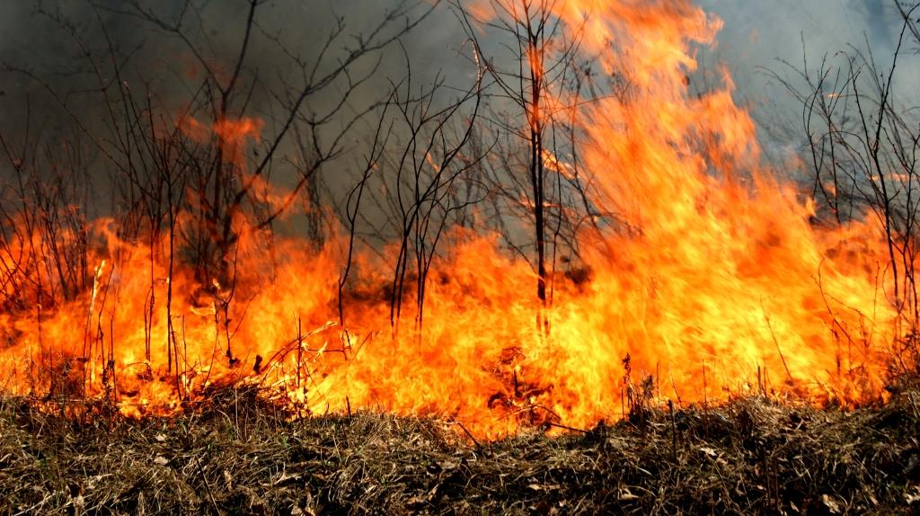 Шесть лесных пожаров потушили вПриморье засутки