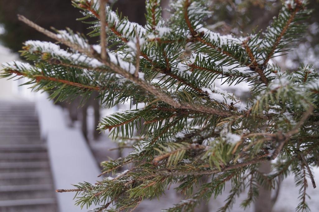Теперешней ночью наПриморье обрушатся дождь имокрый снег