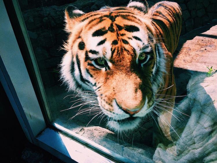 ВУссурийске посетители зоопарка издевались над животными