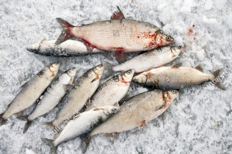 речная рыбалка в приморском крае