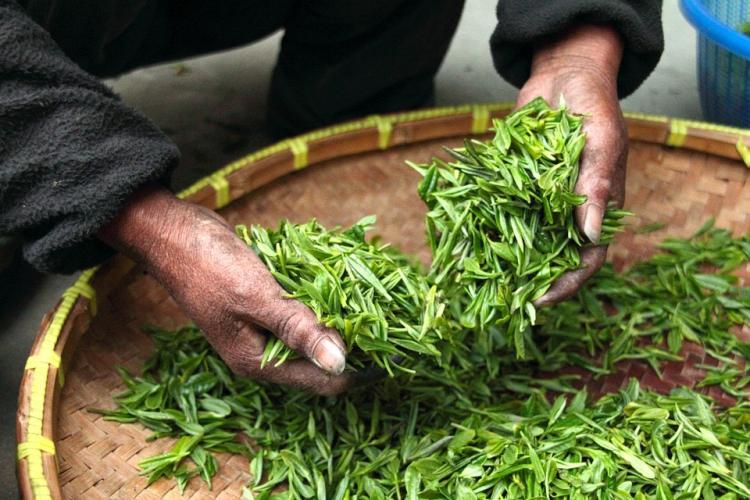 Стало известно, почему Россельхознадзор ограничил ввоз чая изШри-Ланки