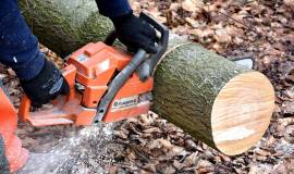 cutting-wood-2146507_960_720.jpg