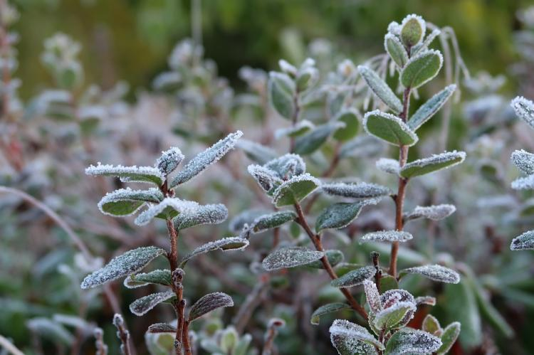 the-first-frost-2751407_960_720.jpg
