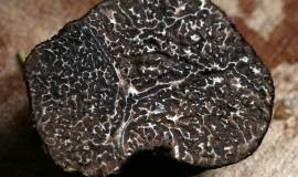 winter-truffle-203032_960_720.jpg