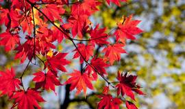 autumn-leaves-2789234_1920.jpg