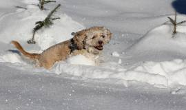dog-in-the-snow-1483456_1920.jpg