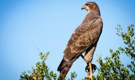 bird-of-prey-1544985_1280.jpg